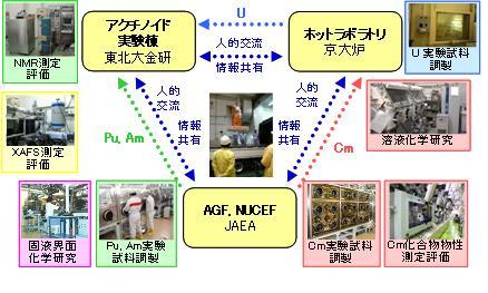 広域連携ホットラボ利用によるアクチノイド研究 (原子力システム研究 ...